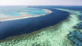 Peneliti Temukan Setengah Great Barrier Reef Australia Hilang