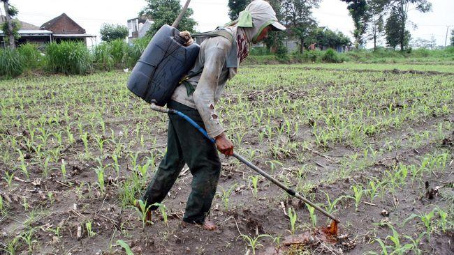 Pupuk subsidi yang mulai hilang di pasaran membuat sejumlah petani di Jawa Tengah harus membeli pupuk nonsubsidi yang lebih mahal.