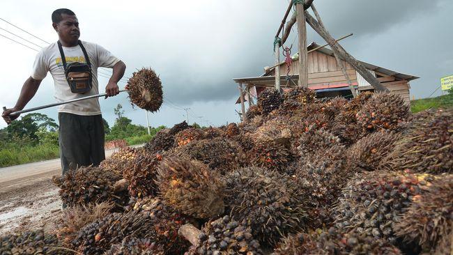 Kementerian Investasi/Badan Koordinasi Penanaman Modal (BKPM) mencatat sebagian besar investasi perkebunan sawit berasal dari Singapura dan Malaysia.