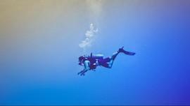 Beberapa Syarat Nikmati Keindahan Bawah Laut