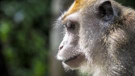 Alasan 27 Monyet NASA Dibunuh Dalam Satu Hari