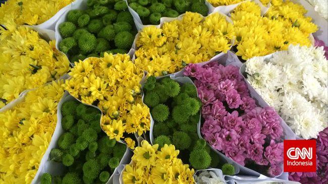 Blusukan Ke Pasar Rawa Belong Surga Bunga Di Tengah Kota