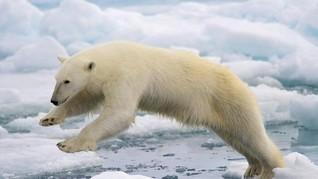 Kawasan Arktika Norwegia Catat Rekor Temperatur Tertinggi