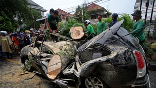 Cara Mengemudi Aman Hindari Pohon Tumbang Dihempas Badai