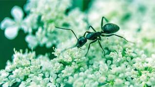 10 Cara Ampuh Usir Semut dari Rumah
