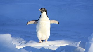 Penguin Romantis di Kebun Binatang Jepang Meninggal Dunia