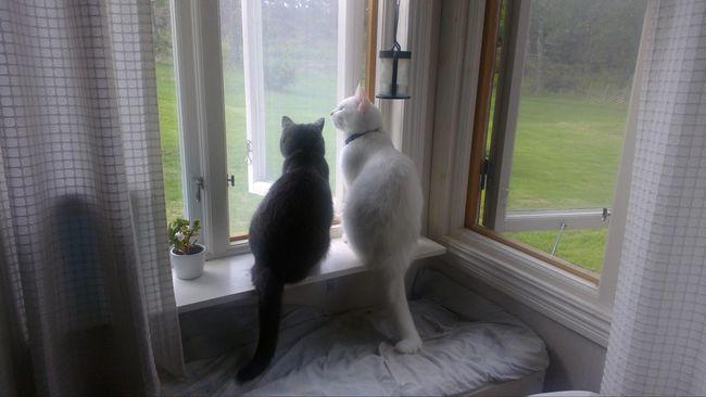 Karena penelitian terbaru menjelaskan bahwa menonton video aktivitas kucing justru punya manfaat kesehatan.