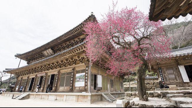 Tak hanya indah untuk dipandangi, pagoda di Jepang juga bisa disambangi untuk belajar teknologi peredam gempa yang kuno.