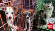 Anjing Kucing Bisa Terinfeksi Virus Corona B117 Asal Inggris