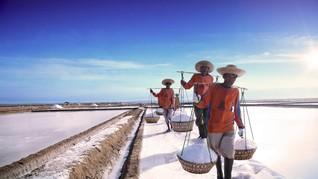 BUMN Usul Importir Garam Diwajibkan Serap Produksi Lokal