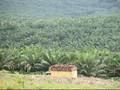 Pebisnis Brunei Siap Tanam Investasi Rp145 T di Kalimantan