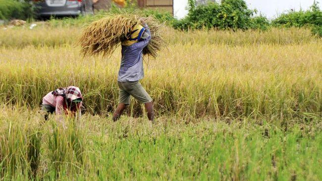 Kementerian ATR telah memperbaiki data lahan baku sawah bersama Kementan. Perbaikan data lumbung padi nasional ini akan dirilis pada 1 Desember 2019.
