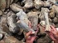 Ahli Temukan Fosil Dinosaurus Raksasa di Argentina