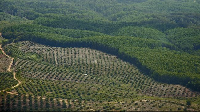 Menurut peneliti Sawit Watch, potensi kerugian negara akibat korupsi perusahaan kelapa sawit mencapai Rp 110 miliar.