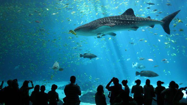 Ahli konservasi memperkirakan 500 ribu ikan hiu akan dibunuh untuk diambil minyak hatinya demi tersedianya vaksin Covid-19.