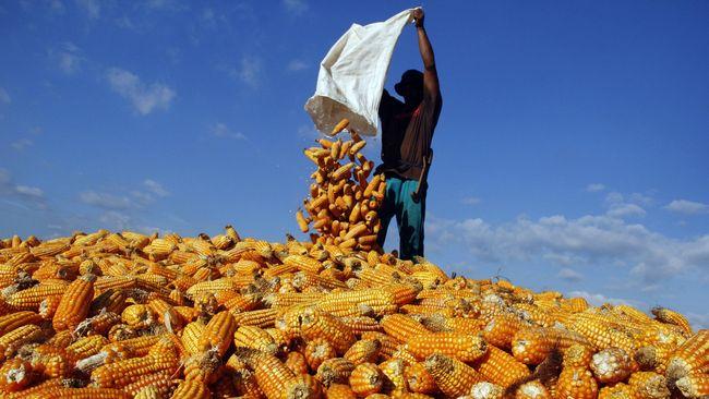 Impor jagung tahap pertama dari Argentina dan Brazil sebanyak 70 ribu ton dapat masuk ke Indonesia pada 20 Desember 2018.