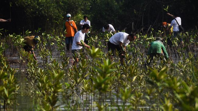 Pertamina Foundation digugat PKPU di PN Jakpus terkait tagihan dalam program Gerakan Menanam Pohon (GMP).