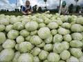 Studi Eropa: Sayur Kol Diklaim Turunkan Angka Kematian Corona