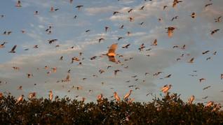 Ilmuwan Temukan Fosil Burung Tertua di Bumi
