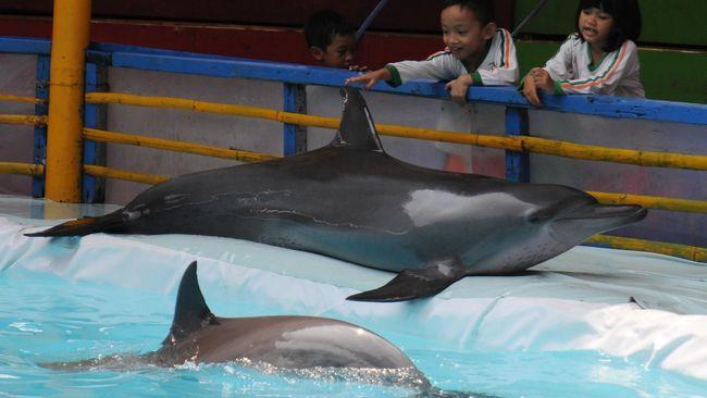 Kementerian Lingkungan Hidup menyatakan pertunjukan lumba-lumba hanya diperbolehkan di lembaga konservasi seperti kebun binatan, taman safari, dan taman satwa.