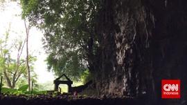 Rencana Pemerintah Bangun Hotel di Hutan Bowosie NTT Dikritik