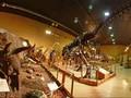 Kata Ahli Soal Hidupkan Kembali Dinosaurus Lewat DNA