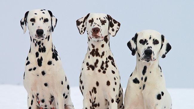 Bagi yang ingin berlibur bersama anjing peliharaan, berikut deretan hotel yang ramah anjing yang bisa diinapi.