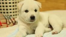 Anak Anjing Berwarna Hijau Lahir di Italia