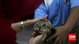 Korsel Mulai Gelar Tes Corona untuk Anjing dan Kucing