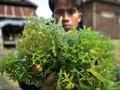 7 Manfaat Rumput Laut untuk Kesehatan