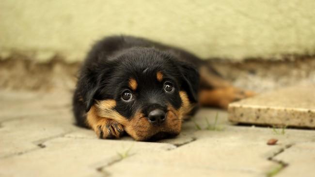 Aktivis Ungkap Versi Baru Kronologi Pengamanan Anjing Canon