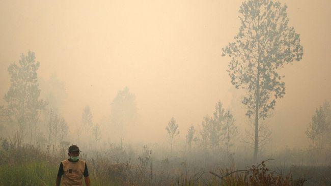 Menurut peneliti LIPI, kebakaran ada di lahan gambut dan sengaja dibakar oleh oknum yang tidak bertanggungjawab.
