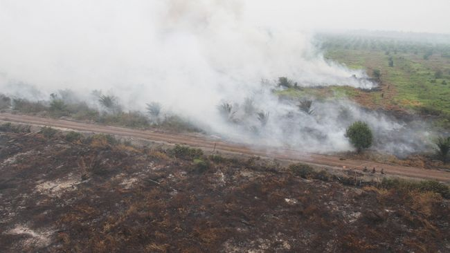 KLHK menyegel area perkebunan yang terbakar di Kalimantan Barat. Area tersebut milik lima perusahaan perkebunan, yakni PT SUM, PT PLD, PT AAN, PT APL, PT RJP.