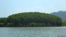 20 Persen Hutan Bakau Sumsel Kritis, Biota Laut Terancam
