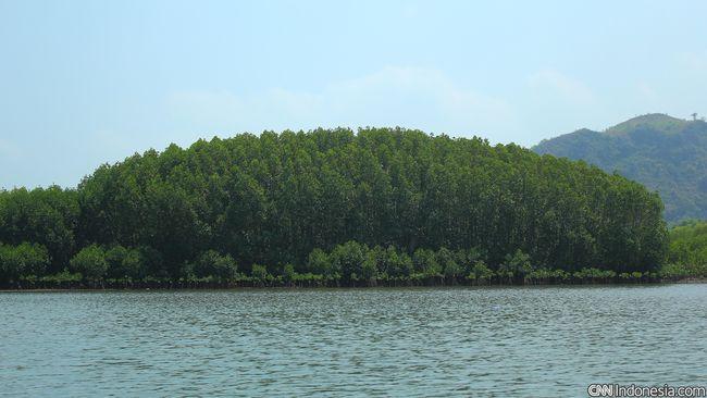Dinas Kehutanan Sumsel mencatat lebih dari 30 ribu Ha hutan bakau dalam kondisi kritis karena aktivitas masyarakat.