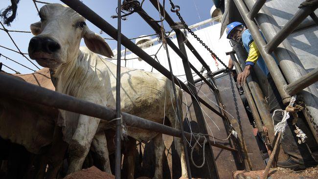 Selain stempel kementerian, KPK menyita stempel bertuliskan nama organisasi internasional dari beberapa negara yang terkait dengan kegiatan impor daging.