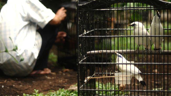 Eksistensi Pantai Lovina dan Taman Nasional Bali Barat terancam oleh rencana pengembangan PLTU Celukan bawang.