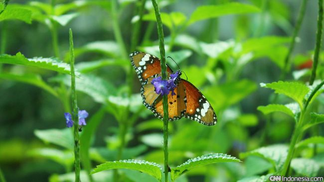 Lebih dari 200 spesies kupu-kupu hanya dapat ditemukan di Kolombia, menurut tim peneliti Blanca Huertas,