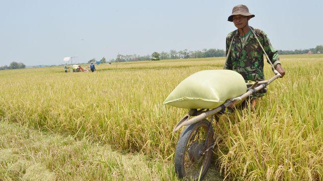 Pengamat menilai bila impor jadi sumber pangan, seperti tertuang dalam draf omnibus law, bisa jadi bumerang bagi neraca dagang.