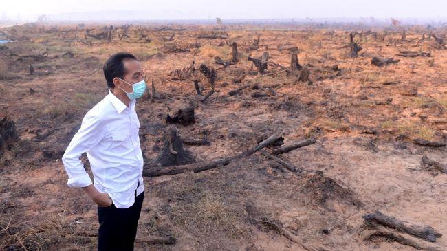 Pemerintah memutuskan akan mengajukan PK atas penolakan kasasi kasus kebakaran hutan dan lahan di Kalimantan Tengah tahun 2015.