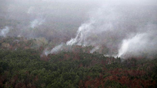 Direktur Eksekutif WALHI Jambi Musri Nauli mengatakan sebanyak 18 perusahaan telah menyebabkan kebakaran hutan di 20 desa dan 5 kabupaten di Jambi.