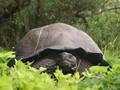 Swiss Sambut Kelahiran Bayi Kura-Kura Raksasa Galapagos