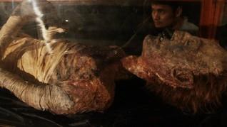 Proyek Manusia Purba 'Bersuara' Macam Mumi 3.000 Tahun