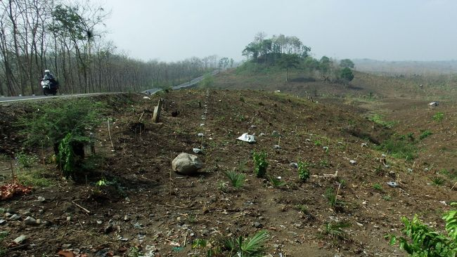 Warga mendapatkan berkah dengan menjaga hutan di Desa Durian Rambun, Jambi setelah sebelumnya rusak karena aktivitas bisnis besar.