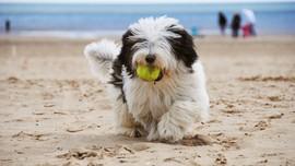 Pelihara Anjing Tingkatkan Kesehatan Jantung