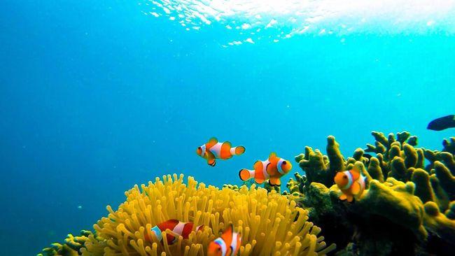 Pulau Pahawang di Kabupaten Pesawaran adalah primadona wisata baru Provinsi Lampung, menyusul kesuksesan Teluk Kiluan dengan atraksi lumba-lumbanya