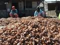 Ketum GAPMMI: Gernas Kakao Harus Dihidupkan Lagi