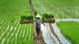 Petani Minta RUU Sistem Budidaya Pertanian Ditunda