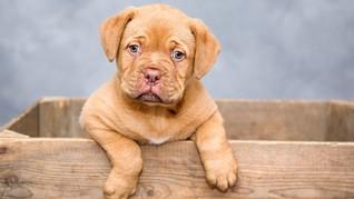 Cegah Eksploitasi, Inggris Larang Toko Hewan Jual Anak Anjing