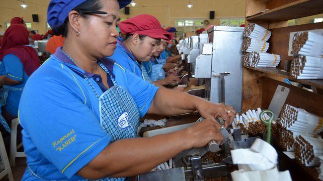 Sejumlah pekerja mitra produksi sigaret (MPS) PT HM Sampoerna melinting rokok dengan peralatan tradisional di Kabupaten Bojonegoro, Jawa Timur, Kamis (29/10). Rencana pemerintah yang akan menaikkan cukai sebesar 23 persen dalam Rancangan Anggaran Pendapatan Belanja Negara (RAPBN) 2016 memicu reaksi penolakan dari produsen rokok dan juga para pekerja.(Antara Foto/Aguk Sudarmojo)